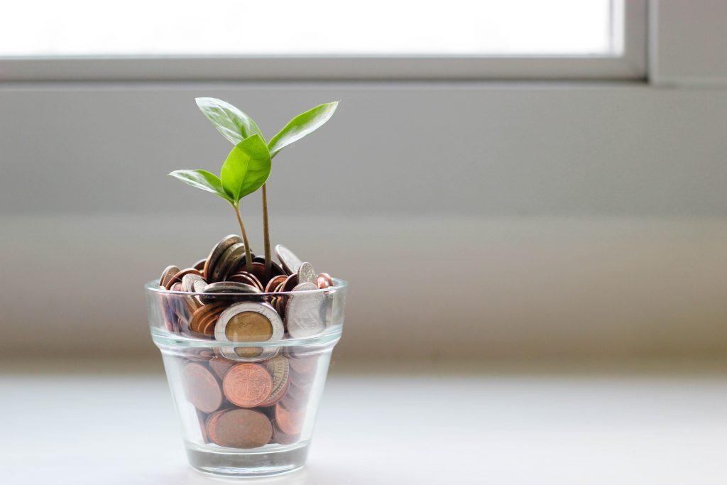 money grows